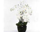 https://sklep.hydroponika.pl/Ro%C5%9Bliny_i_kwiaty_sztuczne/storczyki/5355-Phalenopsis_w_b%C5%82ocie_92_cm_bia%C5%82o-kremowa.html - zdjęcie 2